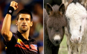 Novak Djokovic Is Buying All The Donkey Cheese In The World
