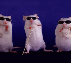 Totally Blind Mice Regain Sight After Chemical Injection