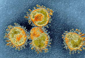 Should We Fear The MERS Virus