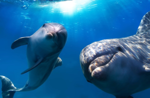 Dolphins Use Whistles To Call Each Other By Name